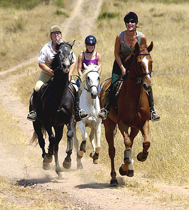 beginners guide to horse riding